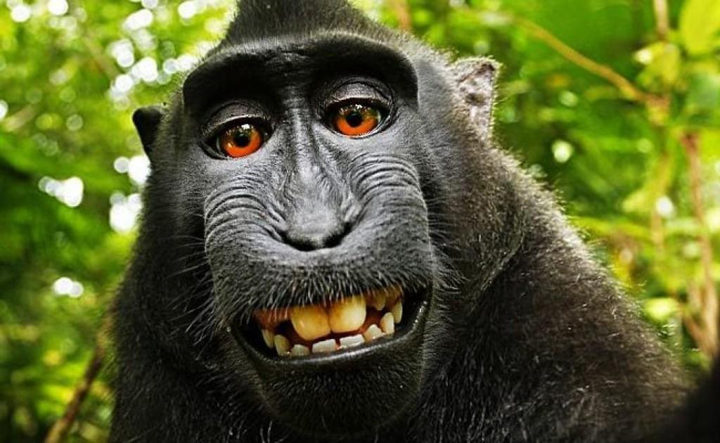 macaco_selfie